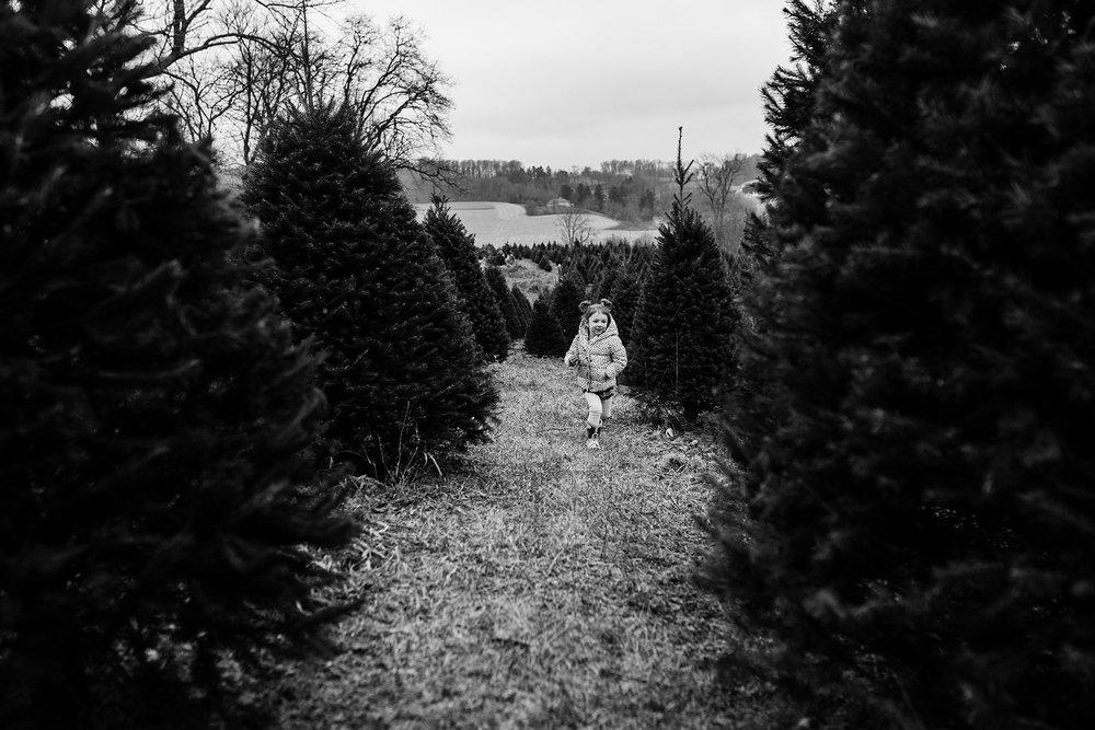 TreeFarm2018-35.jpg