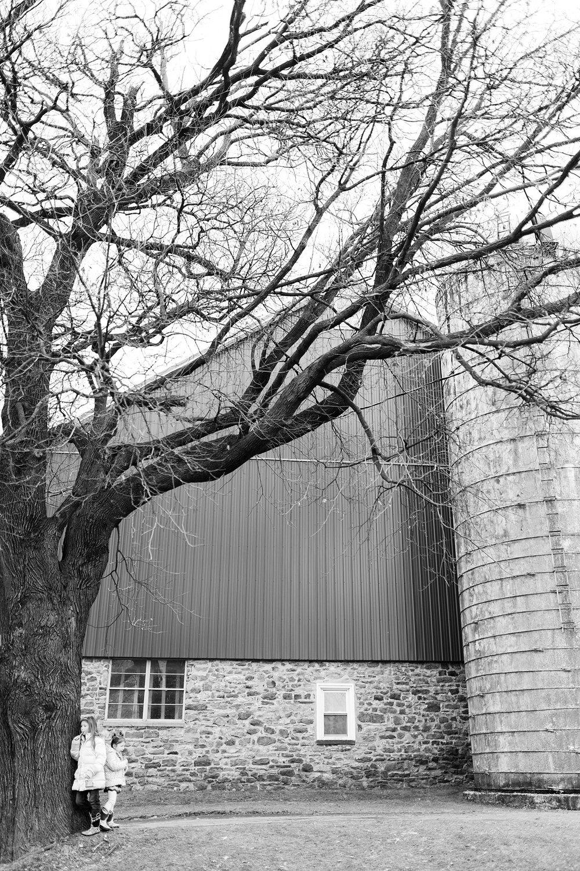 TreeFarm2018-67.jpg