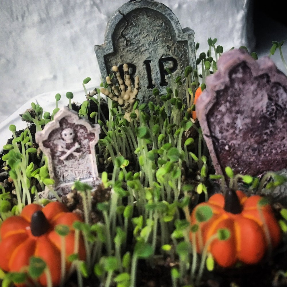 grave4.jpg