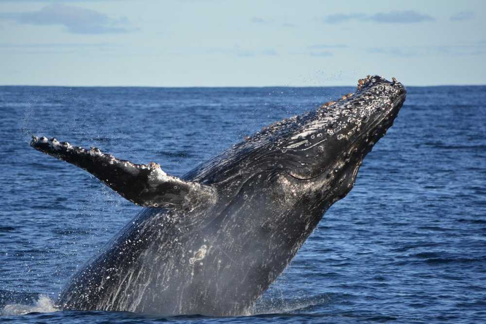 Pacific Whale Foundation Blog -