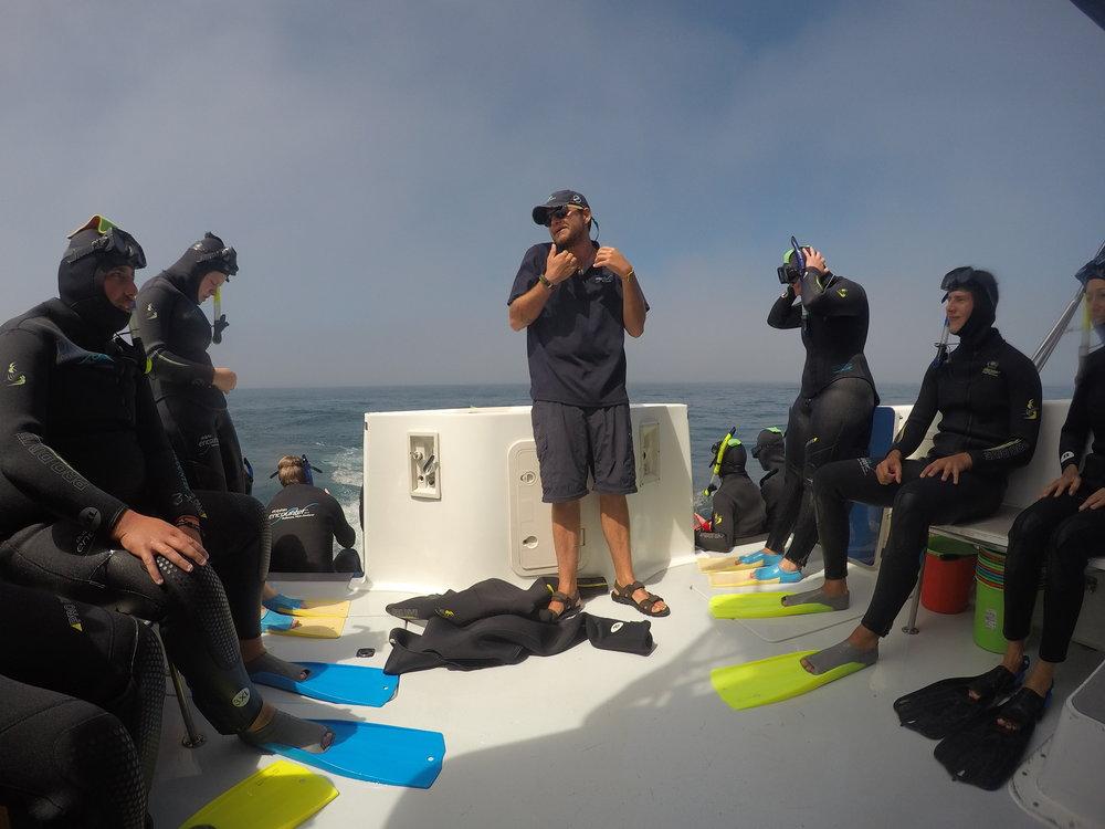 Dolphin Swim Guide Kaikoura