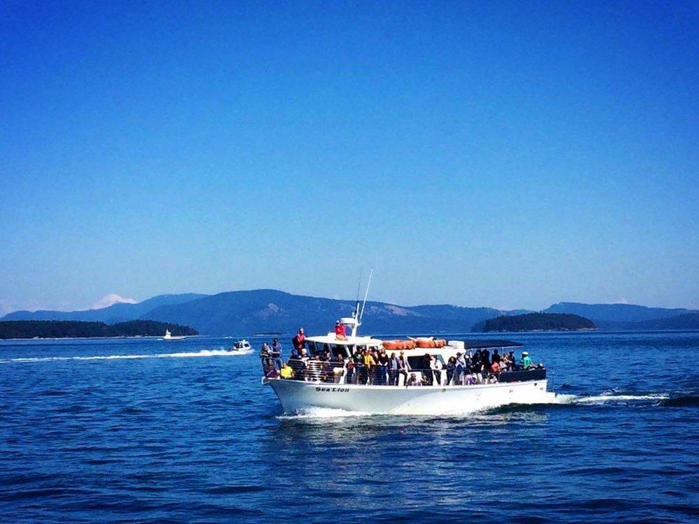 Whale Watch San Juan Island