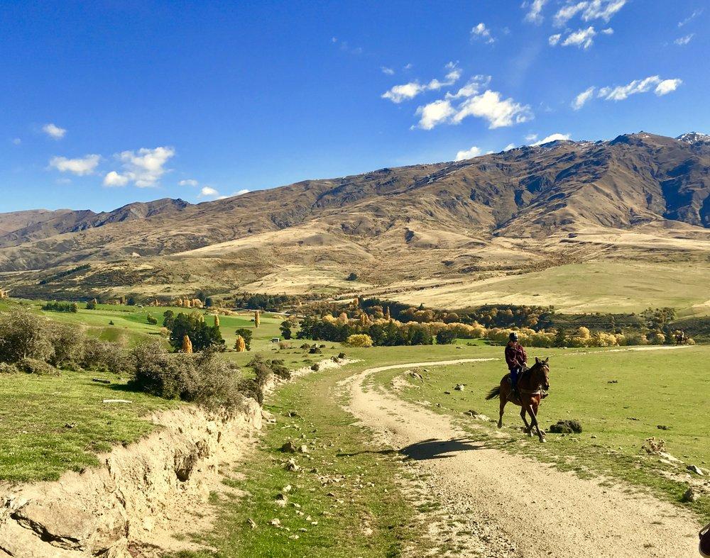 Cantering through the Cardrona Valley