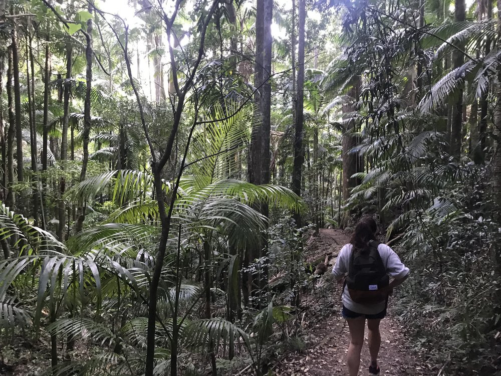 Mount Warning Sunrise Hike
