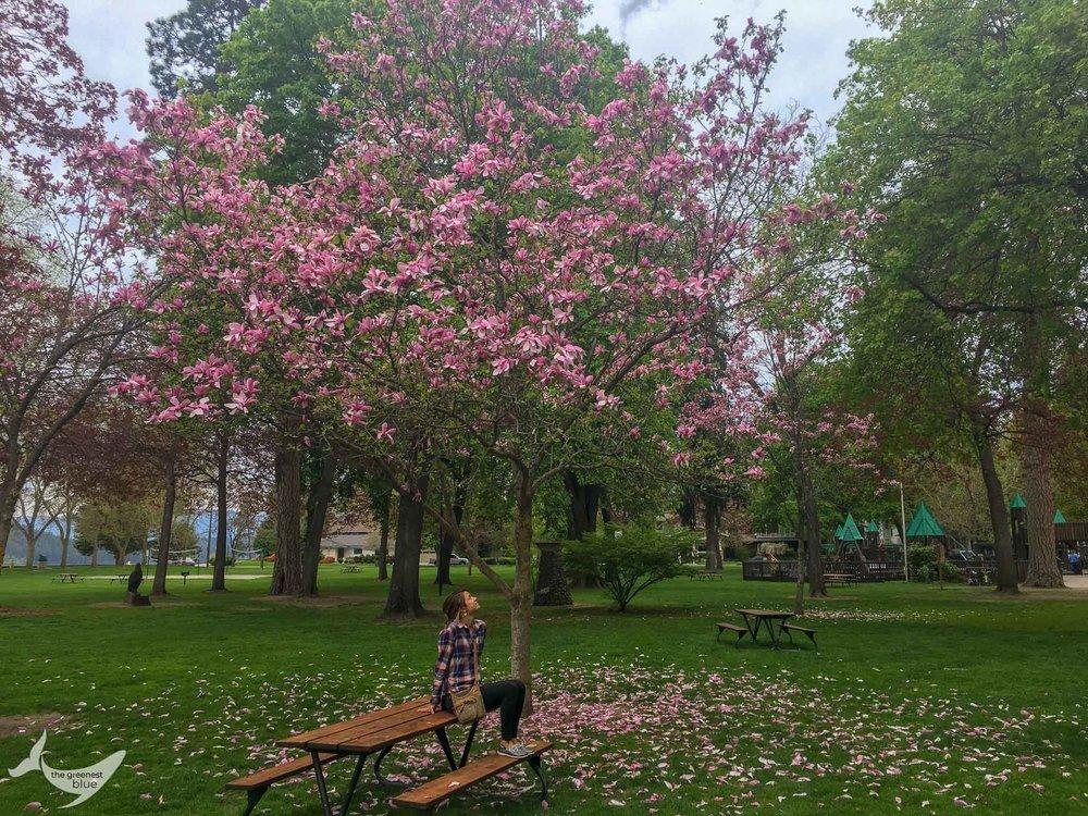 Spring in Coeur d'Alene, Idaho