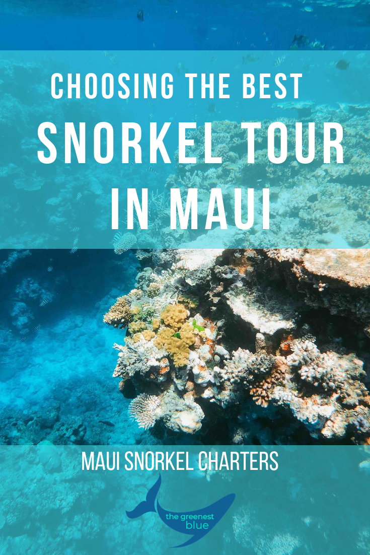 Maui Snorkel Charters - Choosing the Best Snorkel Operator in Maui (and most Ethical)
