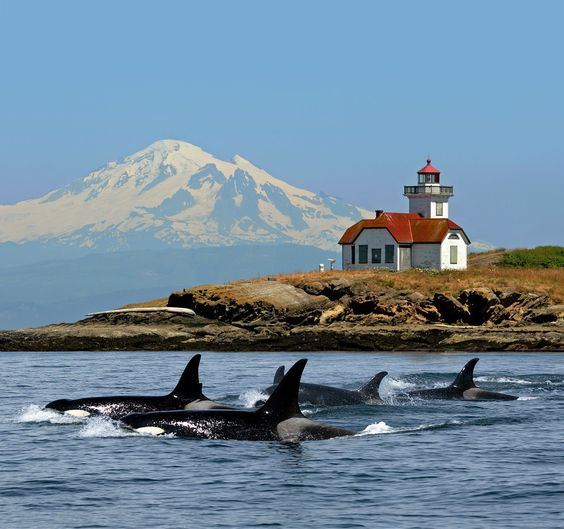Seattle Whale Watching