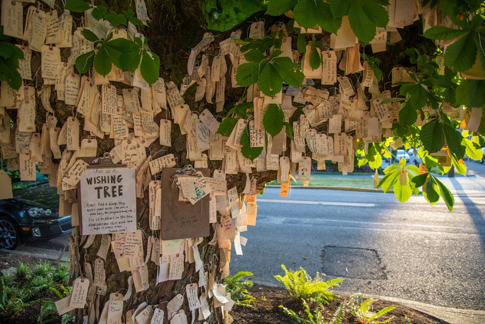 Portland Wishing Tree.jpg