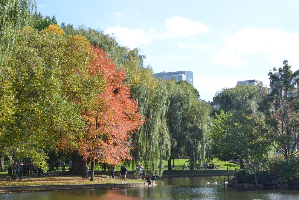fall foliage; bri rinehart