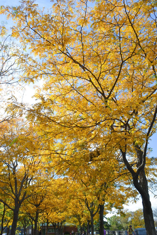 bri rinehart; fall foliage