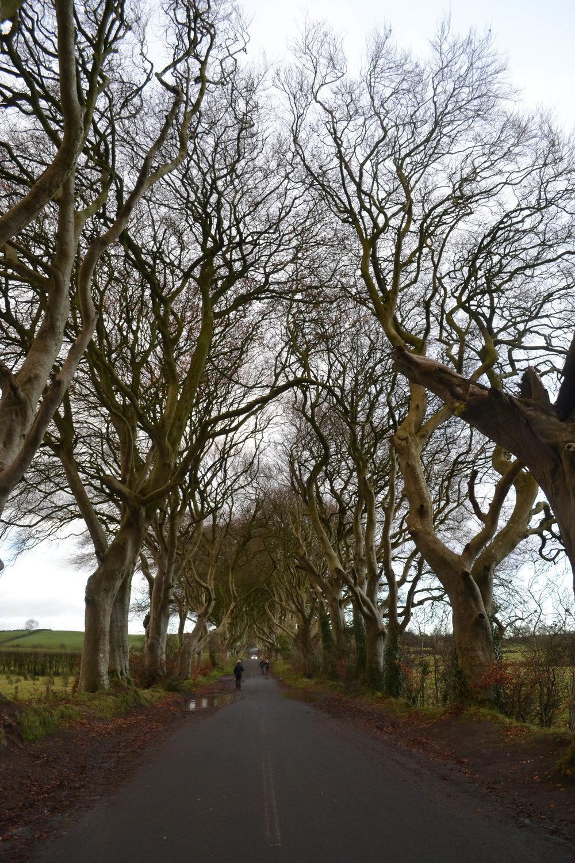 the dark hedges; ireland; game of thrones; bri rinehart