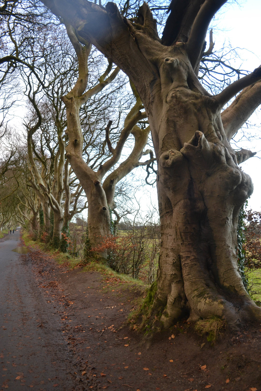 the dark hedges; ireland; bri rinheart; game of thrones