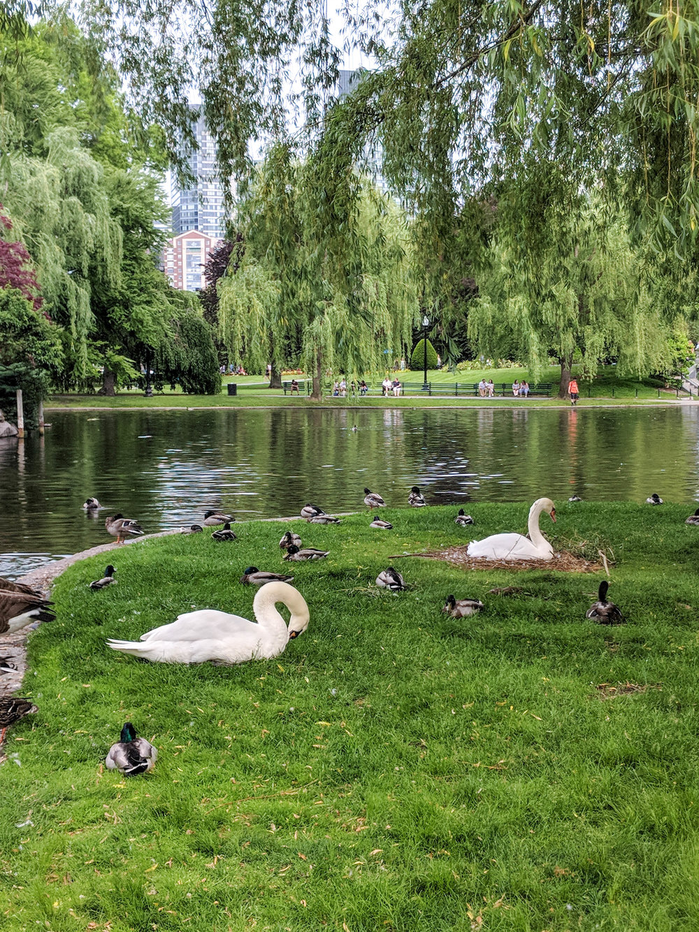 bri rinehart; photography; boston public garden