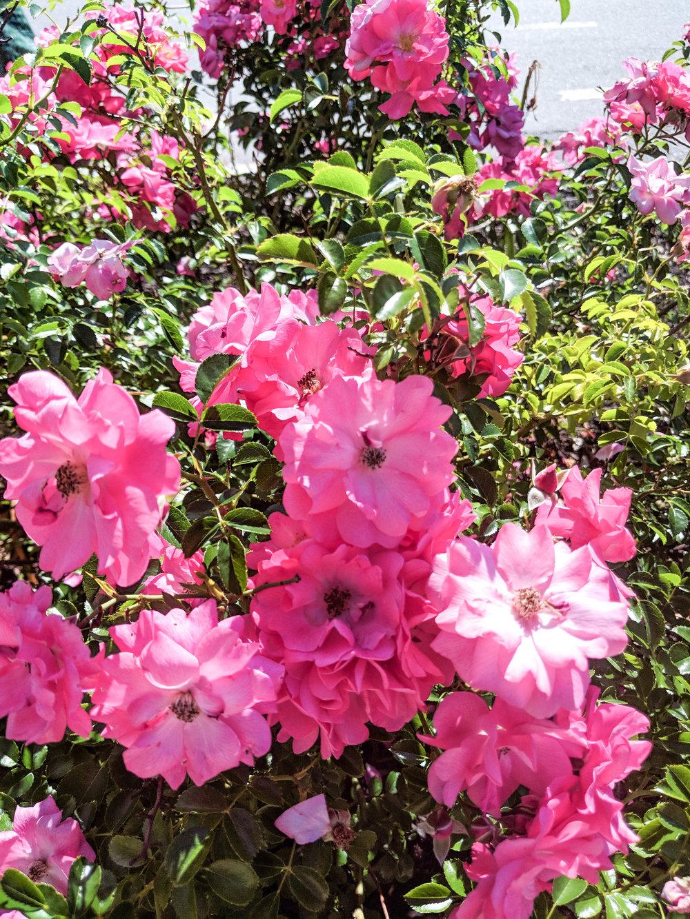 bri rinehart; photography; flowers