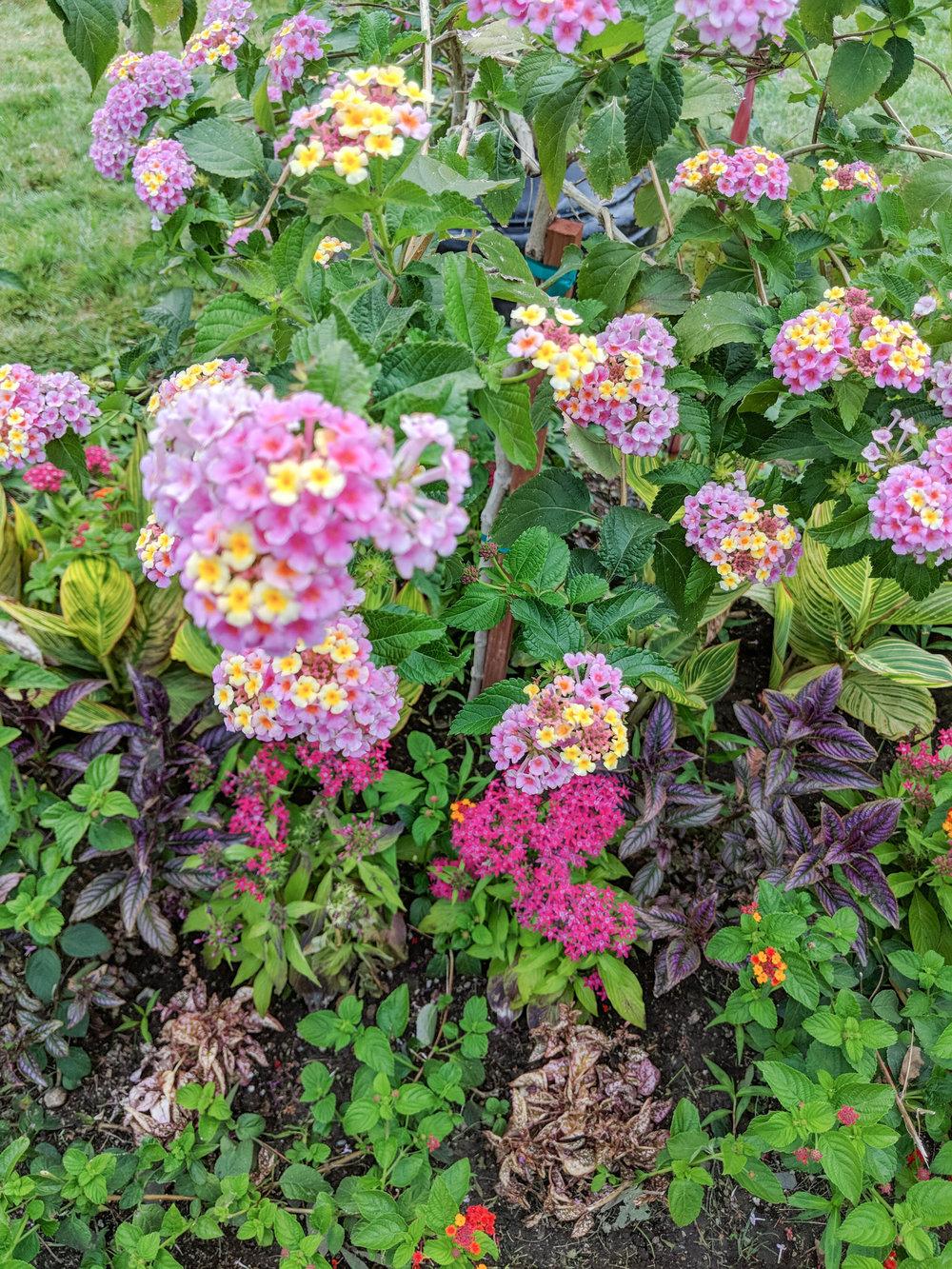 bri rinehart; flowers; photography; boston common