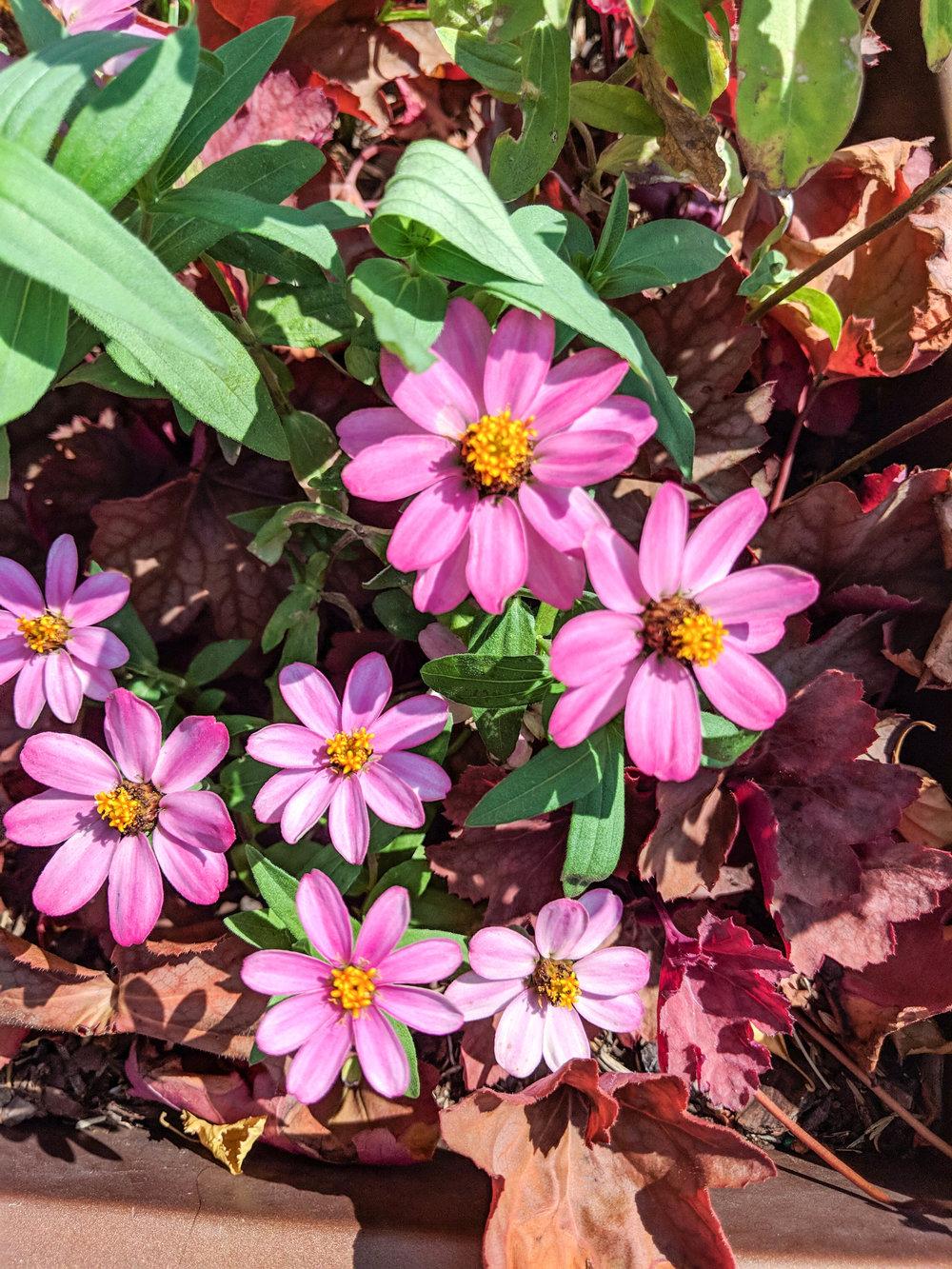 bri rinehart; boston; photography; flowers