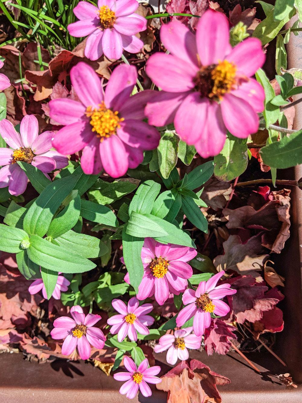 bri rinehart; photography; boston; flowers