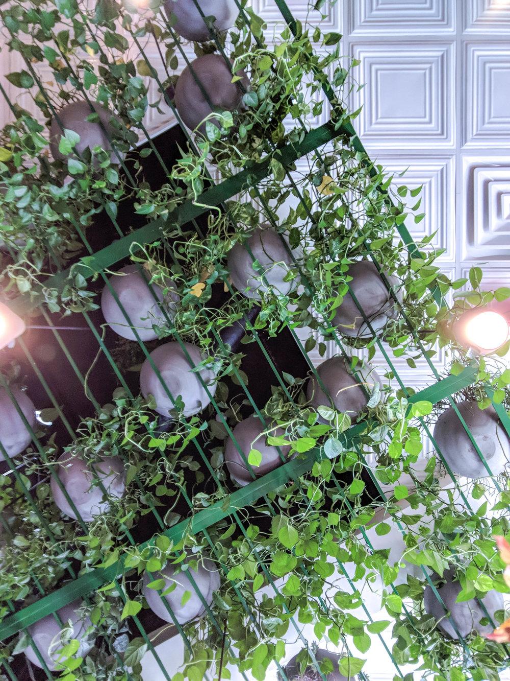 bri rinehart; photography; plants