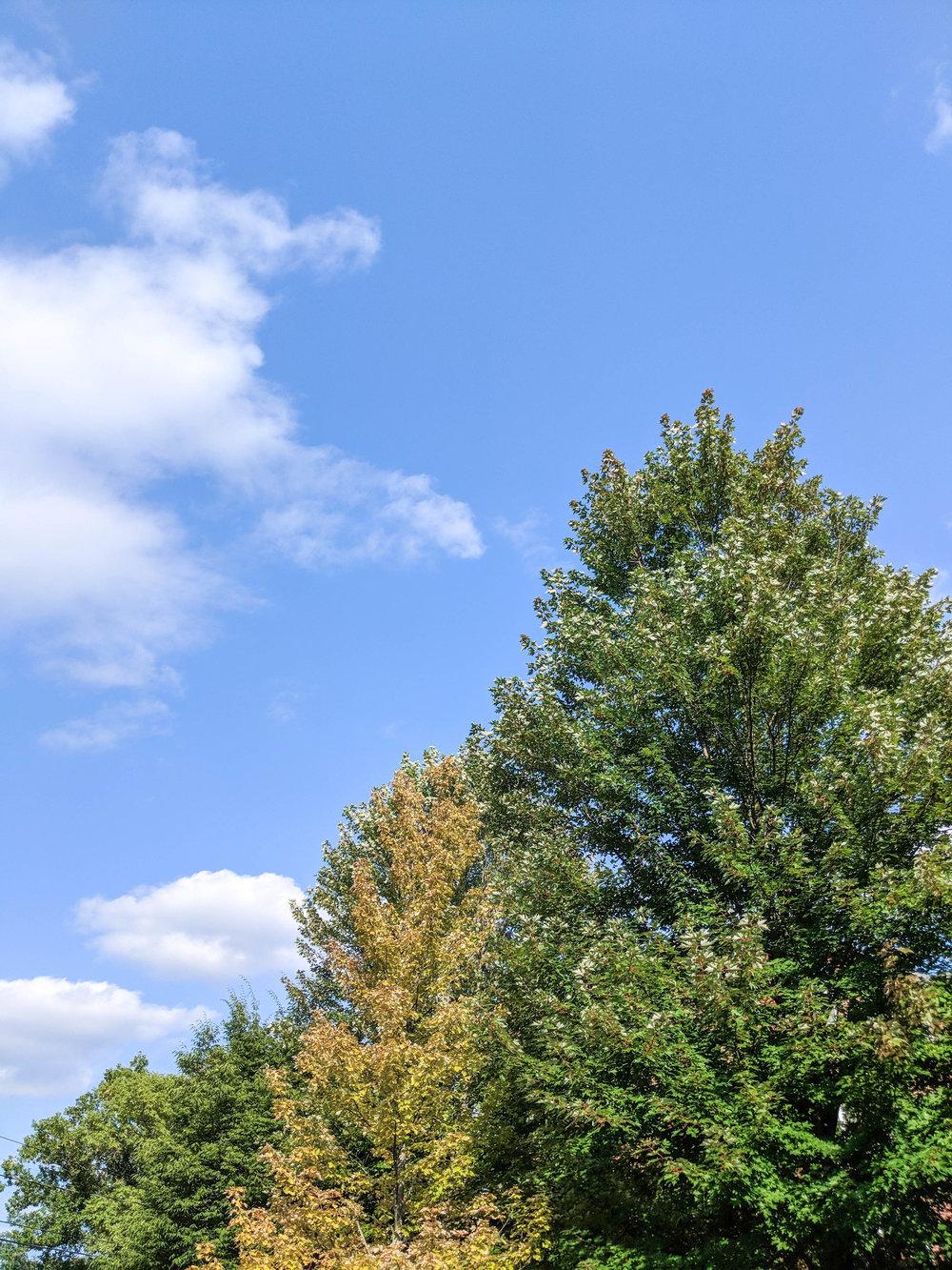 bri rinehart; photography; trees; nature