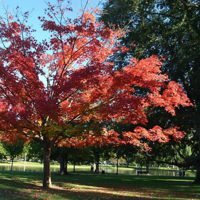 bri rinehart; photography; boston; fall; bri