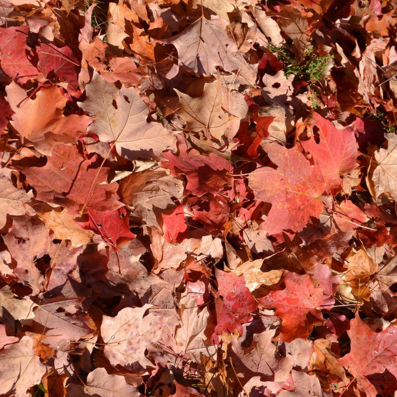 bri rinehart; photography; bri; fall