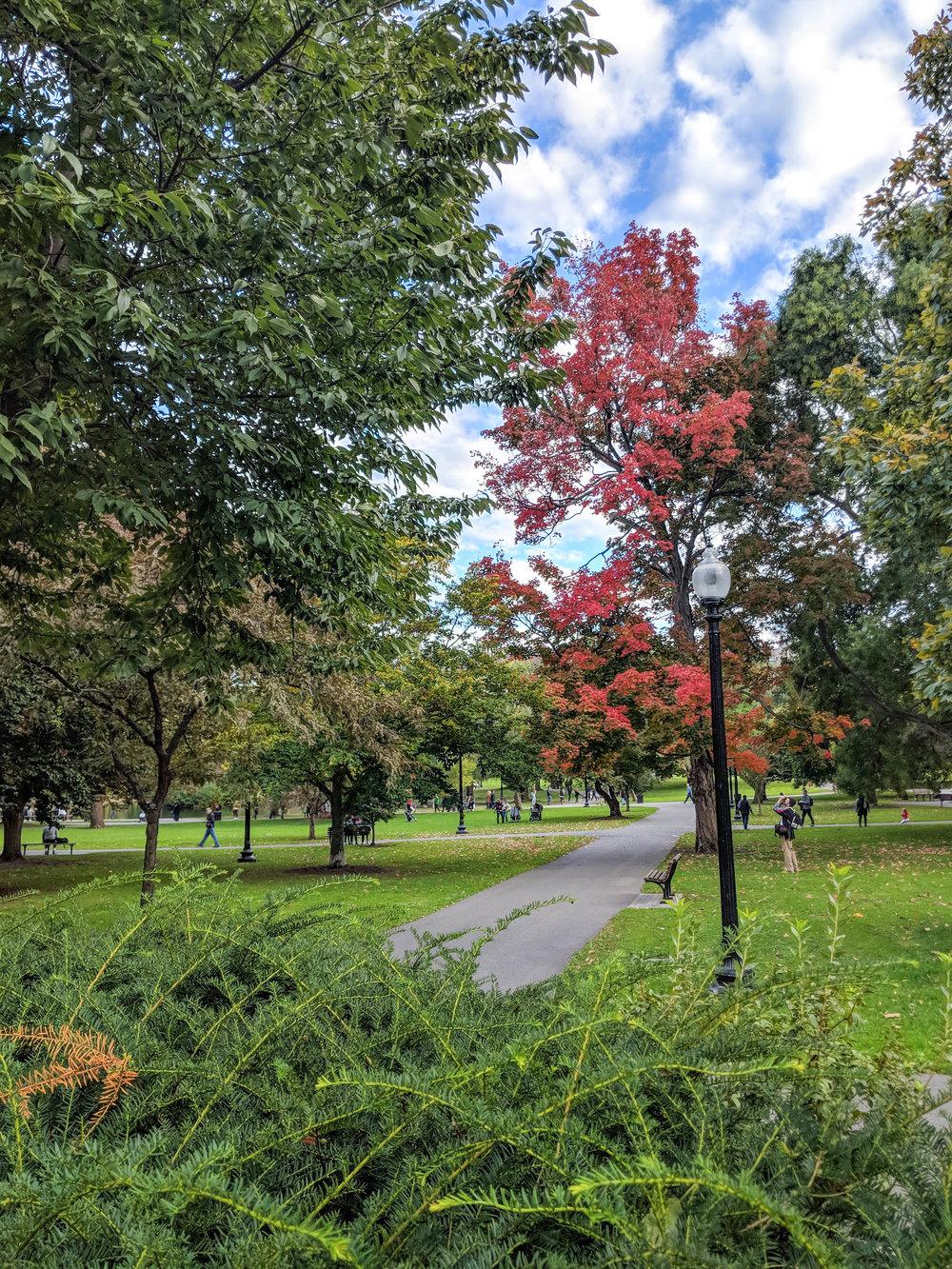 bri rinehart; photography; boston; boston public garden