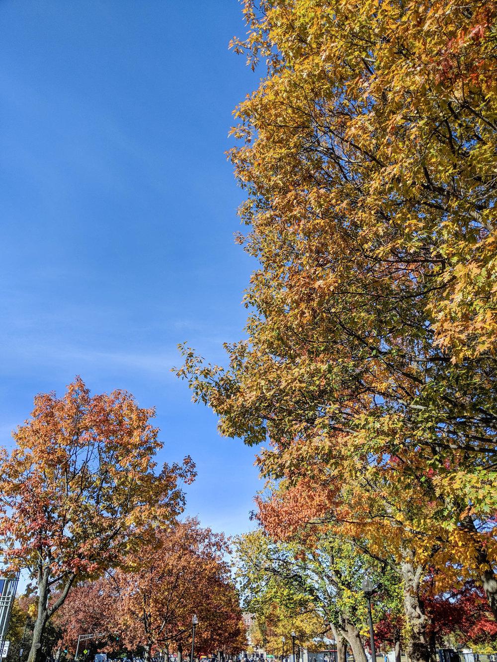 bri rinehart; photography; boston commons; fall; nature