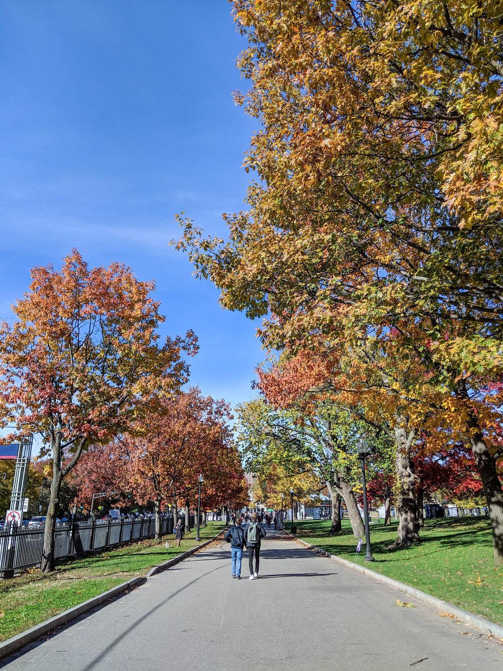 bri rinehart; photography; fall; boston; boston commons; nature