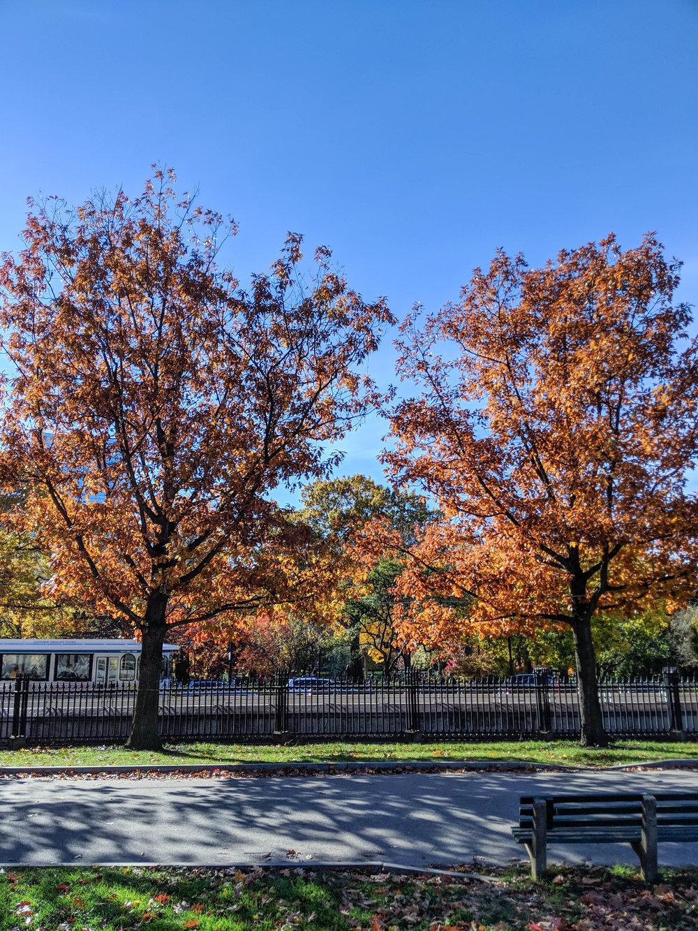 bri rinehart; photography; boston; trees; fall; nature