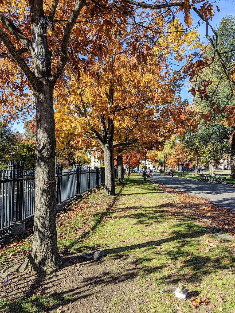 bri rinehart; nature; photography; boston; fall; boston commons