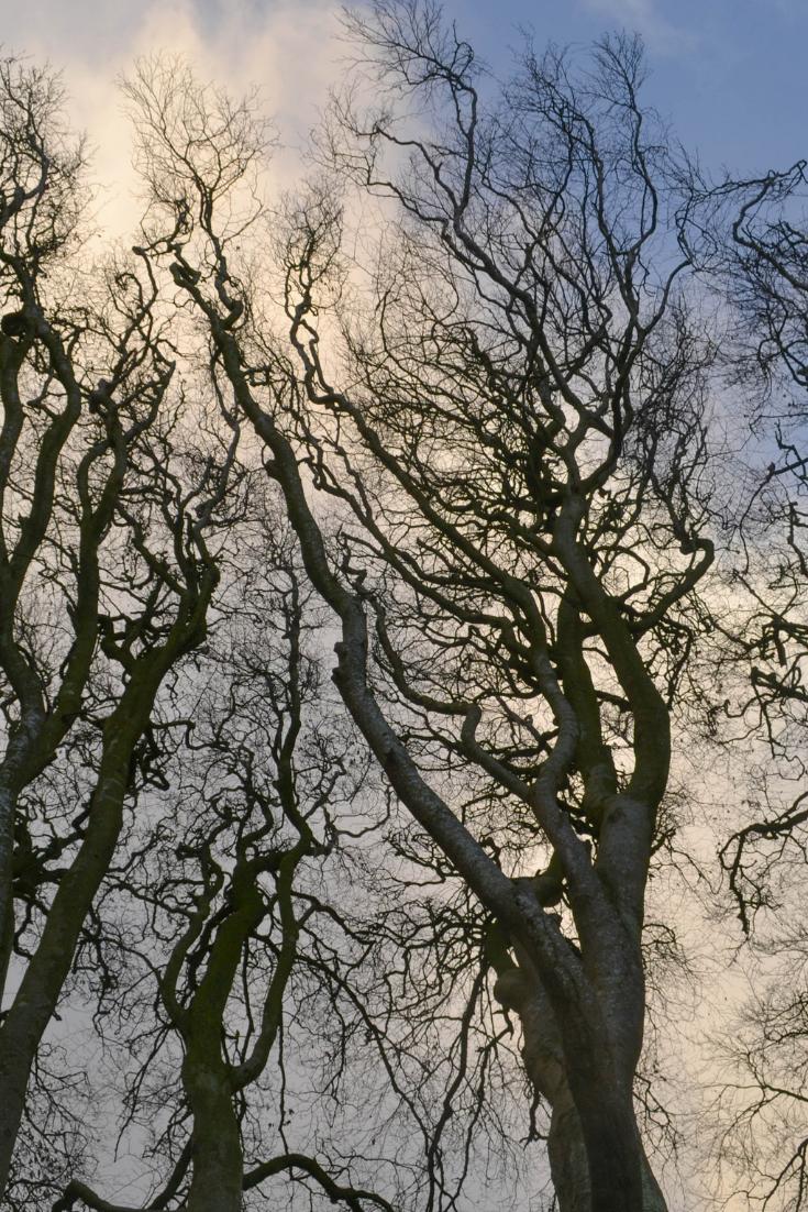 bri rinehart; photography; photographer; work; portfolio; nature