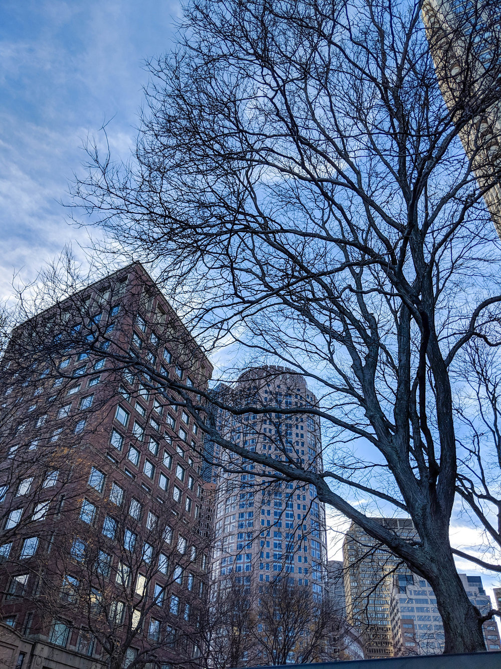 bri rinehart; photography; boston; nature; architecture; buildings