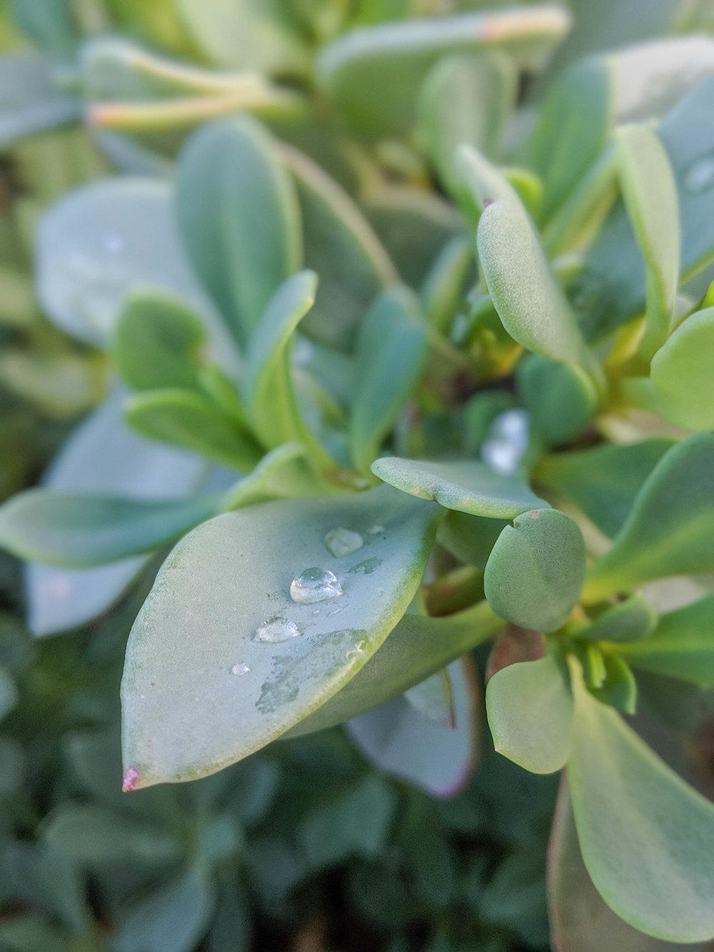 bri rinehart; hanford; succulent; photography