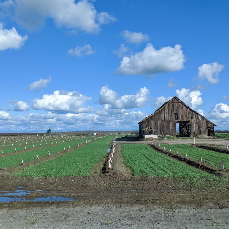 bri rinehart; country; hanford; california; photography
