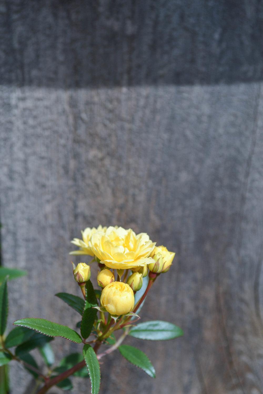 bri rinehart; photography; flowers; hanford