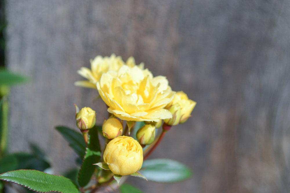 bri rinehart; nature; photography; flowers; hanford