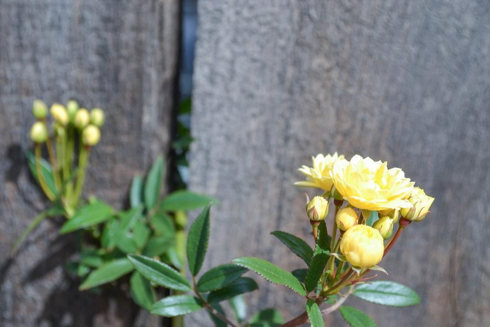 bri rinehart; photography; nature; flowers