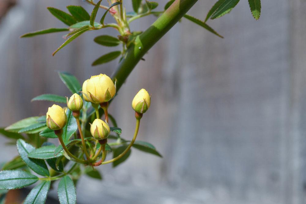 bri rinehart; photography; flowers; hanford; nature
