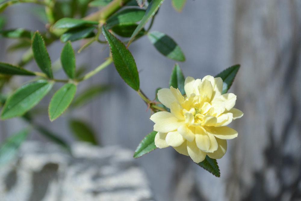 bri rinehart; photography; nature; flowers; hanford
