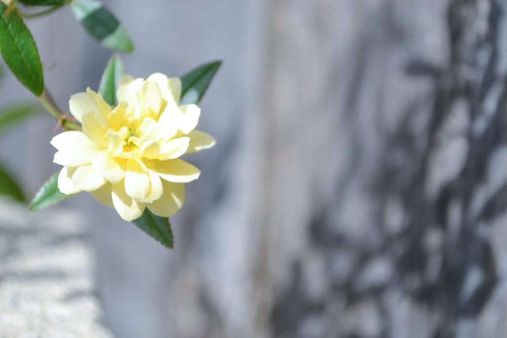 bri rinehart; nature; flowers; hanford; photography