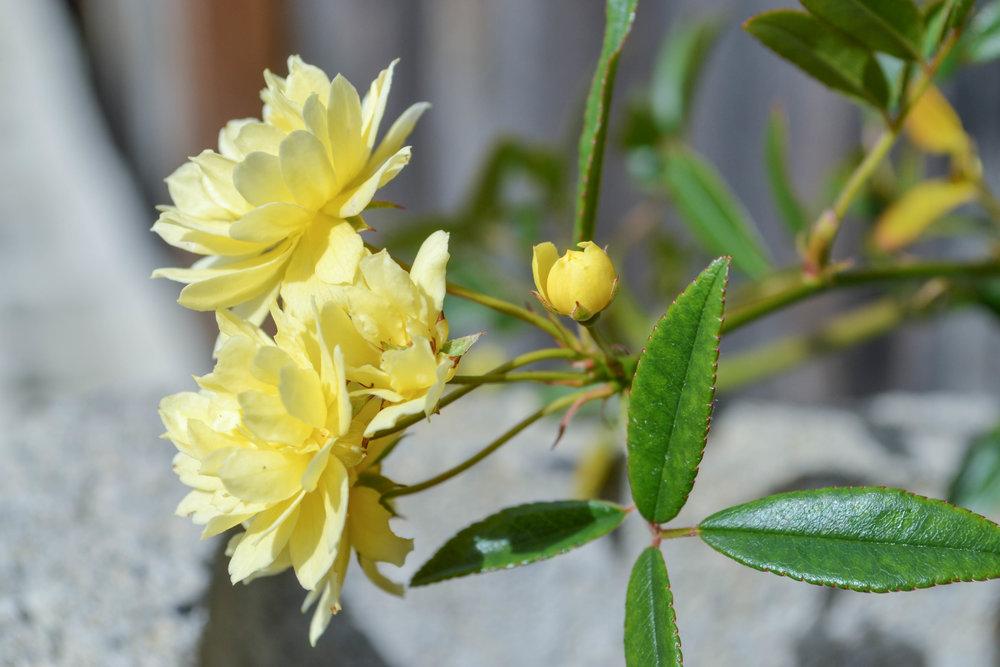 photography; bri rinehart; flowers; nature; hanford