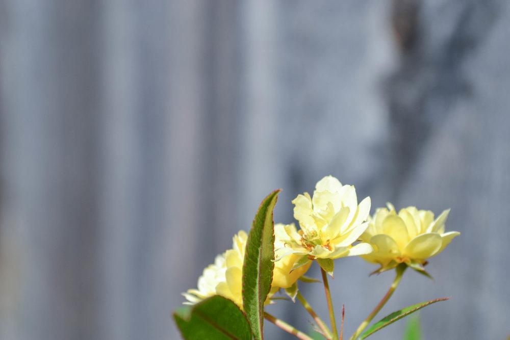 bri rinehart; hanford; photography; flowers; nature