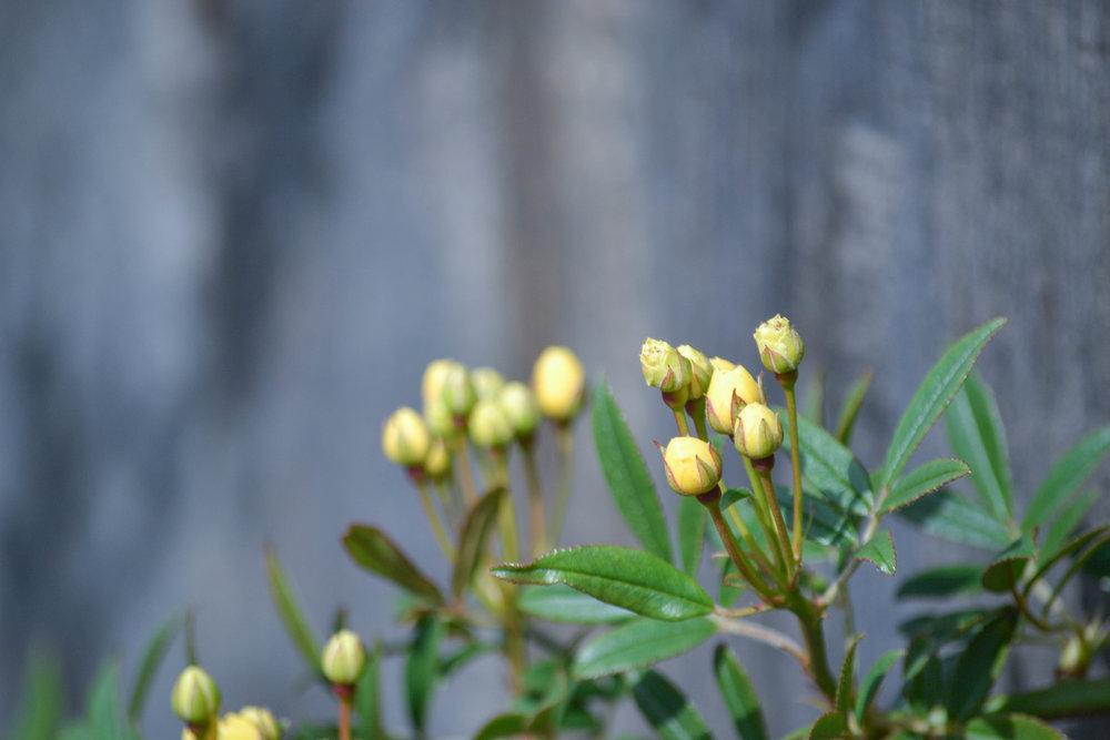 bri rinehart; hanford; photography; nature; flowers
