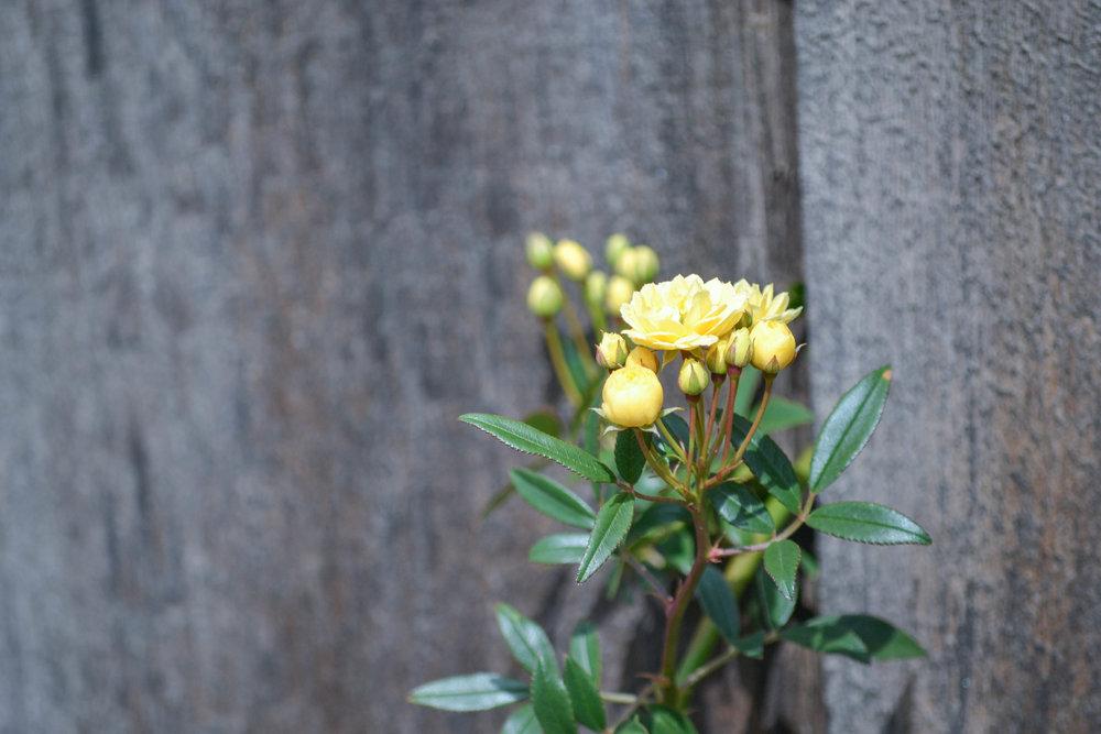 bri rinehart; photography; flowers; nature; hanford