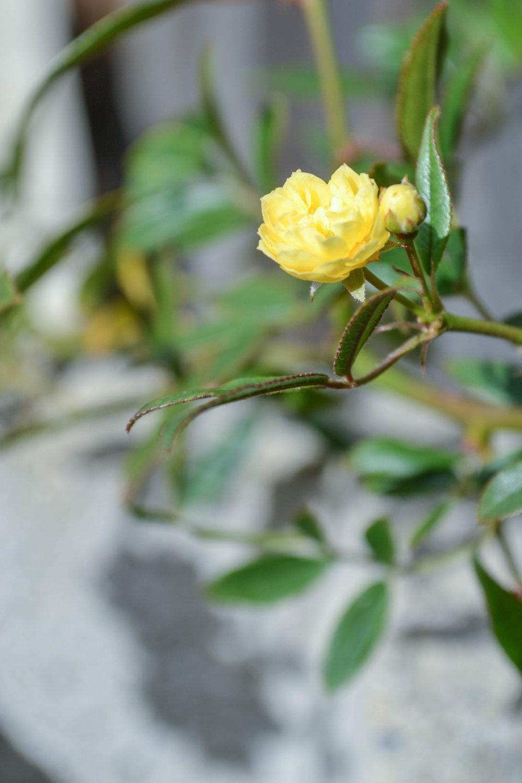 bri rinehart; nature; flowers; photography; hanford