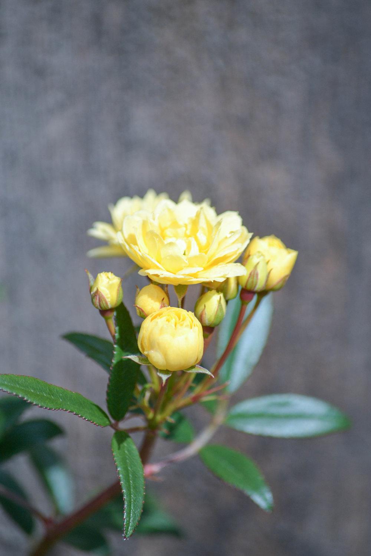 bri rinehart; flowers; nature; hanford; photography