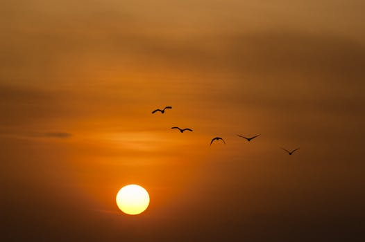 birds at sunset.jpeg