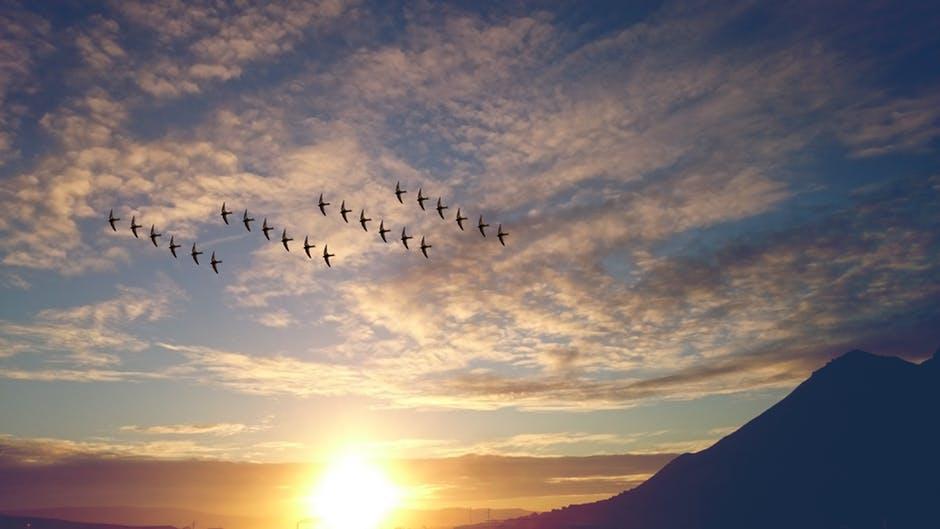 birds soaring.jpg
