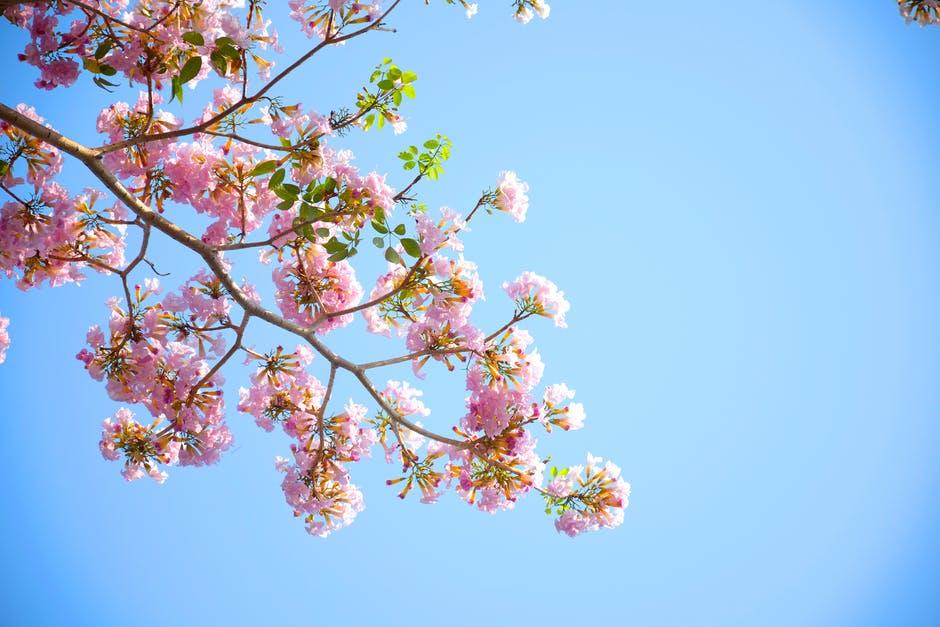 pink tree.jpeg