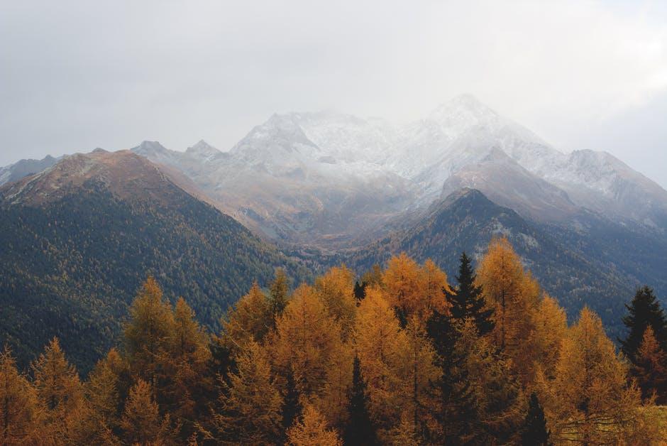 trees and mountain.jpeg